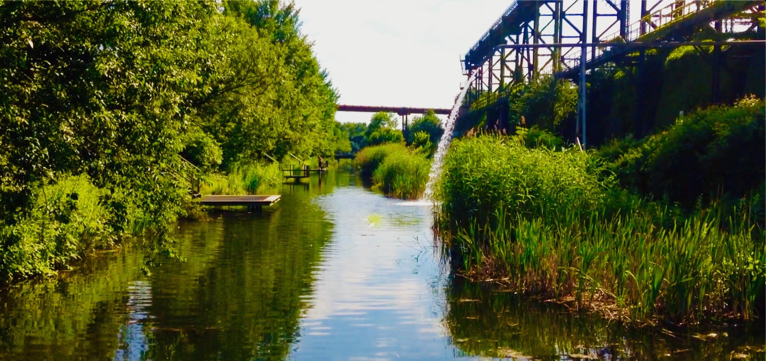 Pflanzen im Landschaftspark Duisburg-Nord