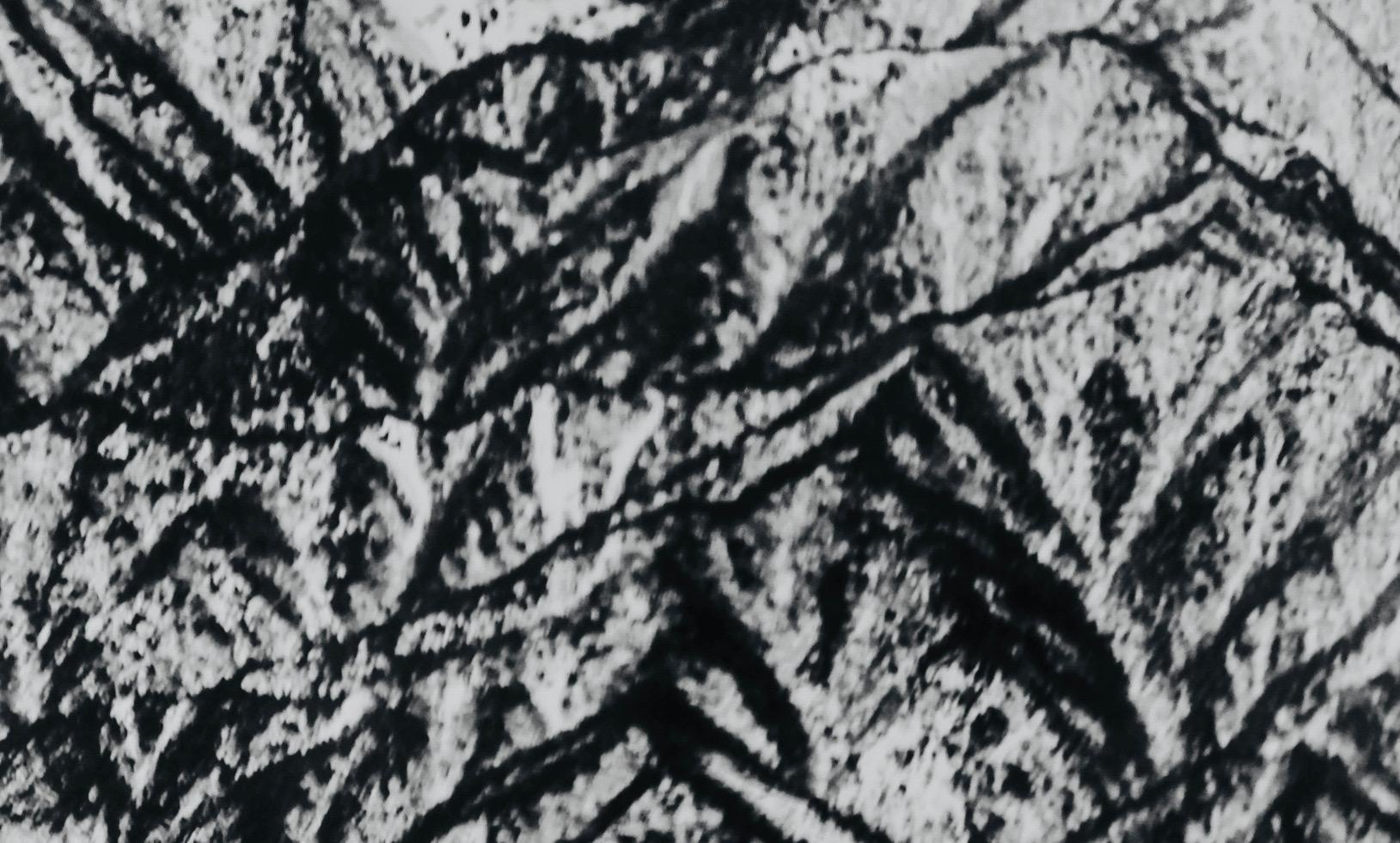 Ishka Michocka: Baum-Fotografien