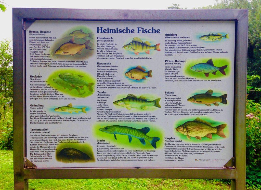 Stadtwald Mettmann: Diese Fische leben in den Seen rund um das Naturfreibad