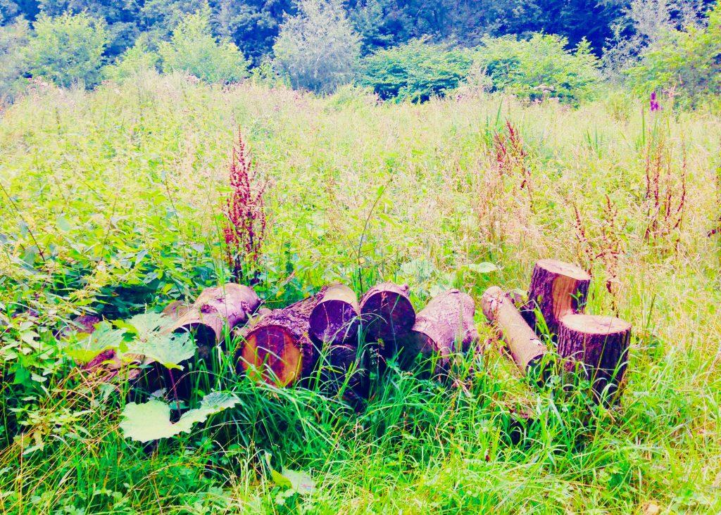 Stadtwald Mettmann: Holz am Wegesrand